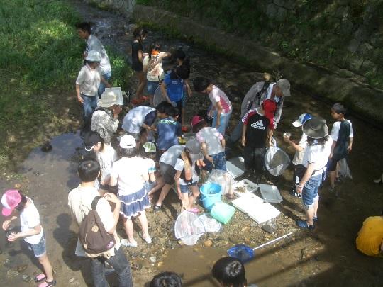 ホタルの学校 活動写真