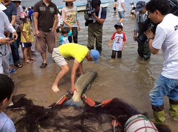 琵琶湖お魚探検隊の活動写真