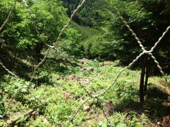 理想の森プロジェクト 活動のようす画像