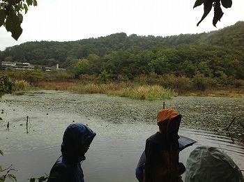 深泥池池畔林研究会 活動写真