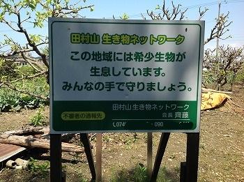 田村山生き物ネットワーク 活動写真