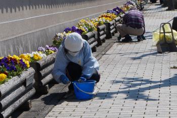 「街中美化運動はなのみち」の活動写真