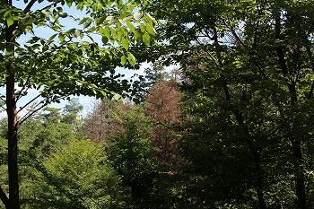 総山管理委員会の活動画像