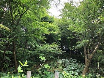 森の風音 活動のようす画像