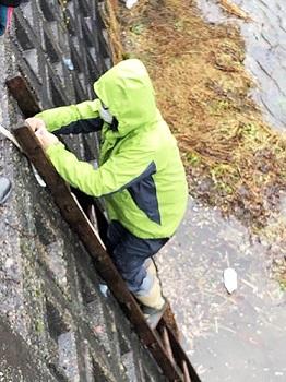 滋賀のオオサンショウウオを守る会 活動の様子画像 ハシゴを下りるメンバー