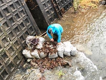 滋賀のオオサンショウウオを守る会 活動の様子画像 川での調査のようす