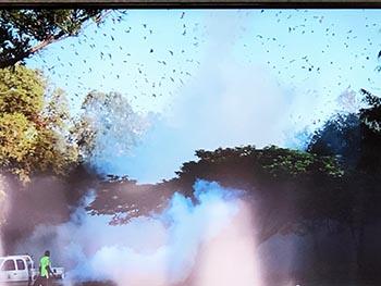 島コウモリ調査グループの活動のようす画像 コウモリの大群が農薬を撒かれている写真