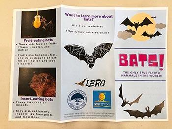 島コウモリ調査グループの活動のようす画像 コウモリを説明した英語のパンフレット
