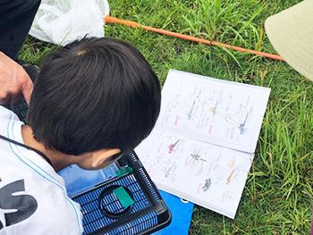 桂坂野鳥遊園子ども自然観察会 活動のようす画像