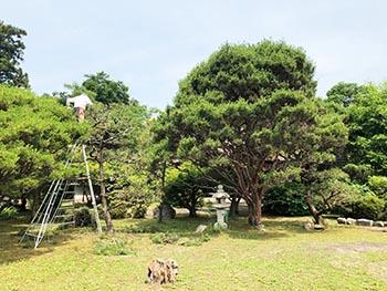 レイカディアえにしの会 活動のようす画像 庭木の剪定中