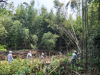 レイカディアえにしの会 活動のようす画像 竹の伐採風景