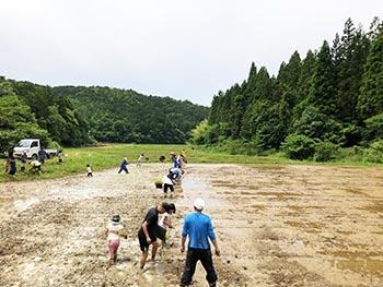 志賀郷ゴキゲン化計画 活動のようす画像 かなり植わった田んぼ