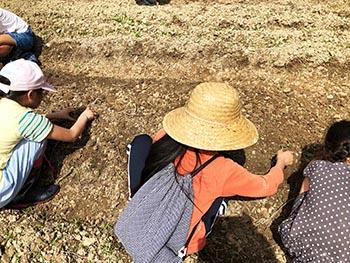 志賀郷ゴキゲン化計画 活動のようす画像 穴を掘り大豆を植える子どもたち